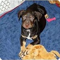 Adopt A Pet :: Chloe - Minneola, FL
