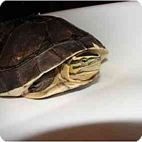 Adopt A Pet :: Bob - Longmont, CO