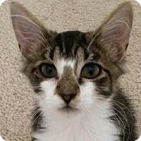 Adopt A Pet :: Hollie - Harrisburg, NC