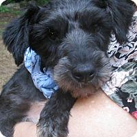 Adopt A Pet :: Gunther - Foster, RI