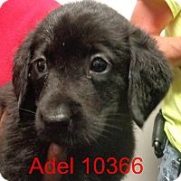 Adopt A Pet :: Adel - Greencastle, NC