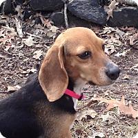Adopt A Pet :: Brie - Edisto Island, SC