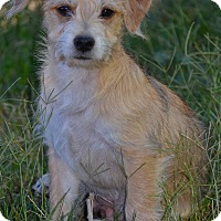 Adopt A Pet :: Smokey - Simi Valley, CA