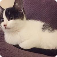 Adopt A Pet :: Pokey - Davis, CA