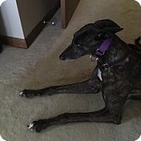 Adopt A Pet :: City Roar - Knoxville, TN
