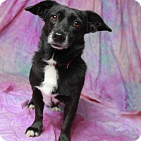 Adopt A Pet :: Lyla - Warner Robins, GA