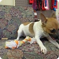 Adopt A Pet :: Itty Bitty - Crawfordville, FL