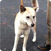 Adopt A Pet :: Emily - Seattle, WA