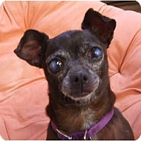 Adopt A Pet :: Moon - Chimayo, NM
