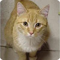 Adopt A Pet :: Ray - Chesapeake, VA