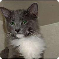 Adopt A Pet :: Barry Meow-nilow - Secaucus, NJ