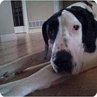 Adopt A Pet :: Zoe - Inver Grove Heights, MN