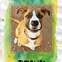 Adopt A Pet :: BRINX - Higley, AZ
