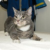 Adopt A Pet :: Drew - New York, NY