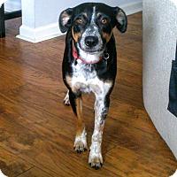 Adopt A Pet :: Kira - Homewood, AL