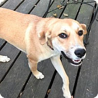 Adopt A Pet :: Ella - Arlington, TN
