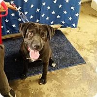 Adopt A Pet :: Jordan - Walthill, NE