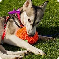 Adopt A Pet :: Stacie - Scottsdale, AZ