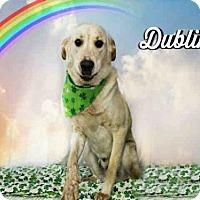 Adopt A Pet :: *DUBLIN - Sugar Land, TX