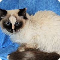 Adopt A Pet :: Aria - Greensboro, NC