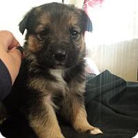 Adopt A Pet :: Keeva - Davis, CA