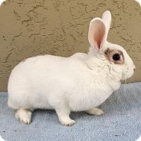 Adopt A Pet :: Millie - Bonita, CA