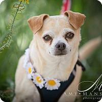 Adopt A Pet :: Thelma - Vista, CA