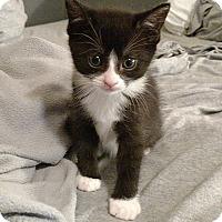 Adopt A Pet :: Gibbs - Tampa, FL