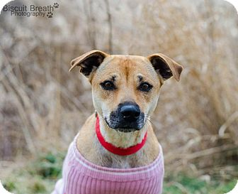 Shepherd (Unknown Type) Mix Dog for adoption in Howell, Michigan - Lizzy