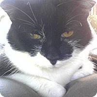 Adopt A Pet :: Amelia - Warren, OH