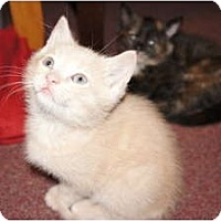 Adopt A Pet :: Eddie*PENDING - Xenia, OH