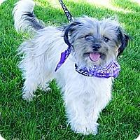 Adopt A Pet :: Lady loves kids - Sacramento, CA
