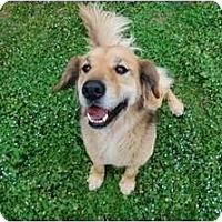 Adopt A Pet :: Joey - Danbury, CT
