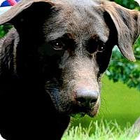 Adopt A Pet :: LAUREN(OUR