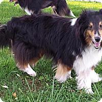 Adopt A Pet :: Nami - Abingdon, MD