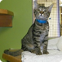 Adopt A Pet :: Bowie - Dover, OH