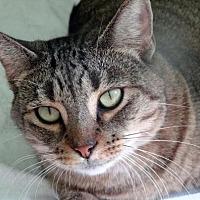 Adopt A Pet :: Helena - Palm City, FL