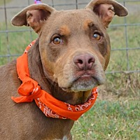 Adopt A Pet :: CoCo  **Video** - Liverpool, TX