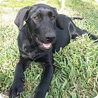 Adopt A Pet :: Heidi - Destrehan, LA