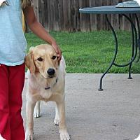 Adopt A Pet :: Ruby - Brattleboro, VT