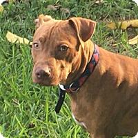 Adopt A Pet :: Redbone - Pompano Beach, FL