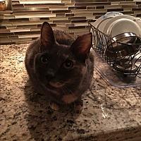 Adopt A Pet :: Delilah - Lauderhill, FL