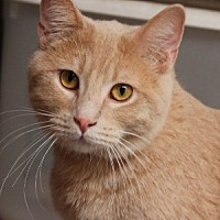 Adopt A Pet :: Chuck - Savannah, MO