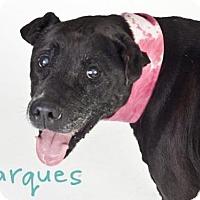 Adopt A Pet :: *MARQUES - Sacramento, CA