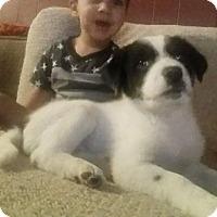 Adopt A Pet :: Princess - Albuquerque, NM