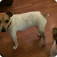 Adopt A Pet :: Annie Oakley - Huntsville, AL
