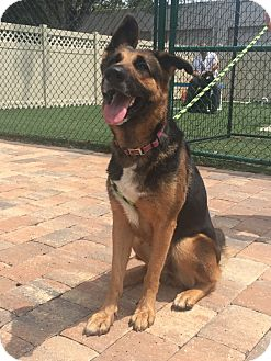 Adopt A Pet :: Sweet Chloe!!  - Ft Myers Beach, FL