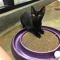 Adopt A Pet :: Harper - Orlando, FL