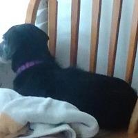 Adopt A Pet :: Rylee - Humble, TX