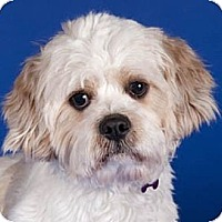 Adopt A Pet :: Kevin - Chicago, IL